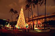 Christmas tree, Honoluu Hale, Oahu, Hawaii<br />