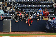 Mississippi fans cheer in the ninth inning vs. Louisville at Oxford-University Stadium in Oxford, Miss. on Saturday, March 13, 2010.  Ole Miss won 8-3.