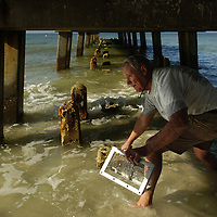 (02.03.2005)(PHOTO/CHIP LITHERLAND) -- Jim Robinson of Bradenton searches for a spot to sift sand for mole crabs, also known as sand fleas, for live bait underneath the pier at Manatee Public Beach in Holmes Beach on Anna Maria Island Thursday, February 3, 2005.