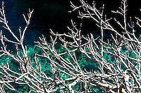 Albero di fico nato sopra la scogliera a picco sul mare