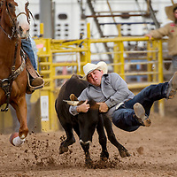 Steer wrestler Trey Nahrgang drops out of his saddle as he grabs the steer during the PRCA July 4th Rodeo at the Dean Jackson Arena in Window Rock Tuesday.