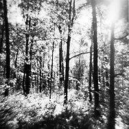 Laura Schmitt Photography -  Holga Photography