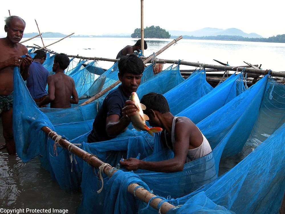 Fishermen of the river Brahmaputra of northeast India is catching fishes. But, rampant various types of Fishing and fishing-nets in River Brahmaputra have created problems to free movement and for food for River Dolphin. Pix-Shib Shankar Chatterjee