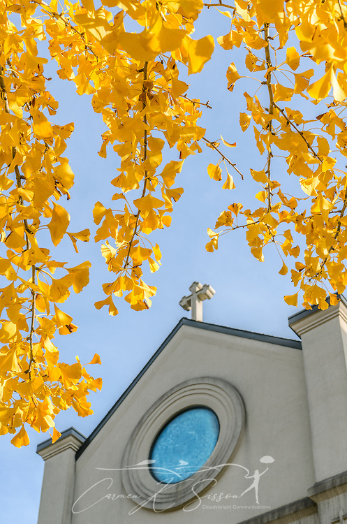 Annunciation Catholic Church is framed by yellow leaves from a nearby ginkgo biloba tree, November 13, 2011, in Columbus, Mississippi. The ginkgo, also known as the maidenhair tree, is a native of China. Its colorful autumn leaves typically last from one day to two weeks. (Photo by Carmen K. Sisson/Cloudybright)