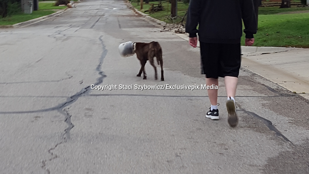 "Dog Had Jar Stuck On His Head For 3 Days <br /> <br /> Residents in a Texas neighborhood were shocked and concerned when they spotted a stray dog wandering the streets — with a large plastic jar stuck firmly on his head.<br /> <br /> The concerned residents contacted Fort Worth Animal Control, and said that it seemed the poor dog, later named Pickle, had been in this predicament for around three days. Pickle was understandably terrified, and therefore refused to let anyone get close enough to help.<br /> <br /> Two animal control officers went out to the neighborhood in search of Pickle, and found him wandering around a wooded area, still with the jar on his head. Because of how scared he was, they knew they would have to get creative to give him the help he needed.<br /> <br /> ""Pickle was – and still is – very scared, so officers actually had to sneak up on him,"" Diane Covey, public information officer with the city of Fort Worth""<br /> After waiting until he was settled and still, the officers were finally able to come up behind Pickle and secure him ...After waiting until he was settled and still, the officers were finally able to come up behind Pickle and secure him ...... they pried the large jar off of his head.<br /> <br /> The plastic jar was the kind used to hold cheese balls, and so Pickle had probably gotten stuck while trying to lick up the remains of the tasty snack. The whole rescue only took a matter of minutes, and as soon as he was free from his plastic prison, the officers took Pickle back to the shelter to get him the care he needed.<br /> <br /> Pickle was extremely dehydrated and had a few lesions, but otherwise he was in OK condition. He's still absolutely terrified of everything and everyone, but hopefully in time he will realize that he's safe now, and that everyone around him just wants to help.<br /> ""He's not aggressive and we can tell he loves people,"" Covey said. ""Staff are taking it one day at a time with him as everyone has said he was traumatized by the incident. He's getting spoiled though, as staff at the sh"