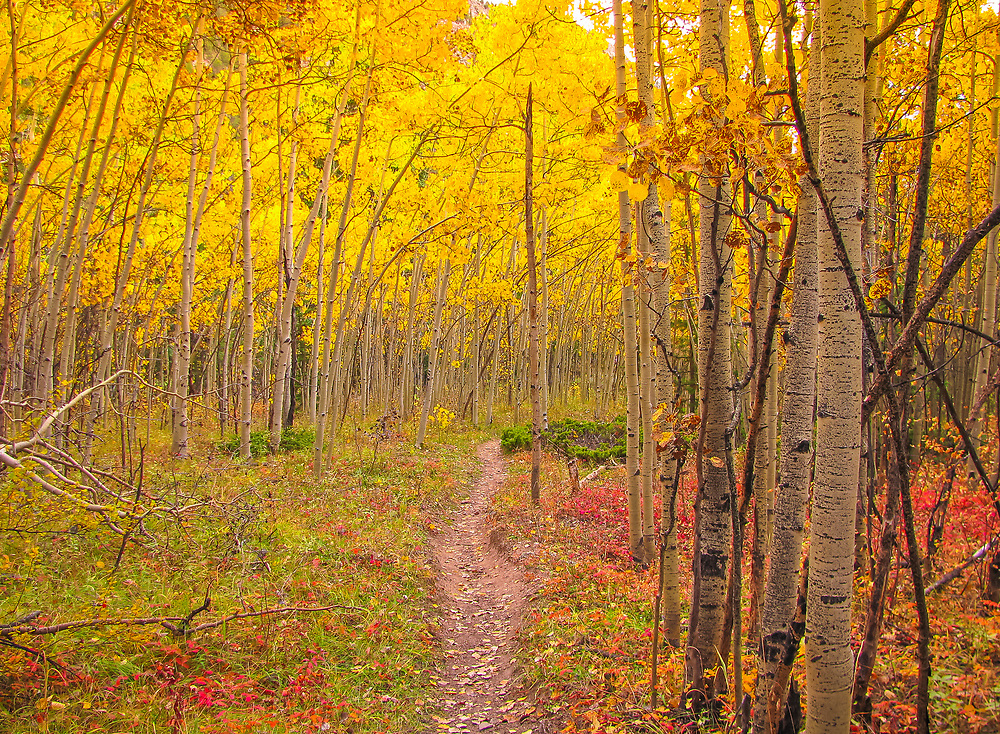 A beautiful Colorado trail during Autumn.