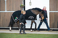Big Star - Stallion AI Services - Twemlows Hall, Whitchurch, Shropshire, United Kingdom - 04 March 2015