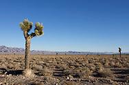 UNITED STATES-RACHEL- Area 51. VERENIGDE STATEN-RACHEL-  Area 51, een militair oefengebied. Volgens omwonenden worden hier veel ufo's waargenomen. PHOTO GERRIT DE HEUS
