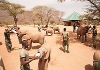 Feeding time @r.e.s.c.u.e is a noisy affair! The elephants charge into the enclosure in a race to secure their bottle - I wouldn't want to get in their way!<br /> <br /> 2 litre bottles, given every 3 hours, are drained in under a minute and then the elephants head for a well deserved mud bath.