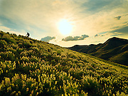 Boise foothills in spring,  lupine fields, Idaho