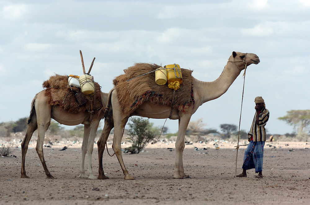 A pastoralist stands with his camels in Dadaab, Kenya September 14, 2006. ..Photograph by Erin Lubin