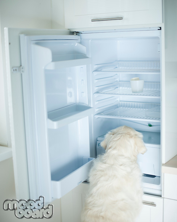 Dog searching food in empty refrigerator