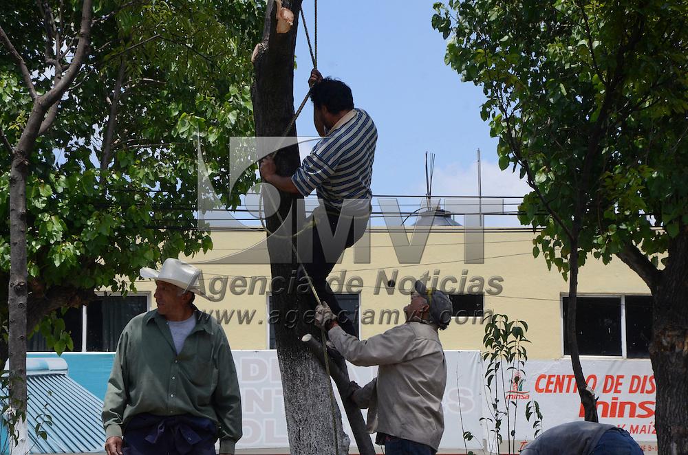 Zinacantepec, México (Agosto 30, 2016).- personal del ayuntamiento de Zinacantepec realizan trabajos de poda de árboles en el camellón de la vialidad Adolfo López Mateos, para evitar que alguna rama que sobresale caiga en algún vehículo.  Agencia MVT / José Hernández.