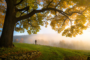 Old man take a look at my life, I&rsquo;m a lot like you. <br /> I can&rsquo;t help but think of these Neil Young lyrics when I look at this image. We had stopped with the group to photograph a beautiful, misty road at sunrise in Vermont, when I looked over to see this photographer. An immense tree and branch framed him perfectly, and the light was to die for. I hope to be perched on hills under beautiful trees, watching the light change, when I&rsquo;m an old man, too.