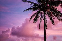 Coconut Palm Tree against Pink Sky at Sunset