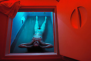 New Age meditation technology. A client at the Altered States Float Center inside a Float Chamber. The Float Chamber contains a 25 cm deep pool of water containing Epsom Salts (magnesium sulphate) and heated to skin temperature. The client may either relax in total silence, have sounds channeled into the chamber through underwater speakers or may view 'self-improvement' videotapes. It is claimed that within a few minutes inside the chamber, the client's left-brain relaxes into deep dream states, allowing meditation and relaxation. The Altered States Float Center is in West Hollywood, California. MODEL RELEASED [1988]