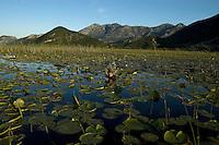 Photographer Milan Radisics on assignment, Lake Skadar, Montenegro