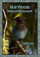 Muir Woods Ntl Monument