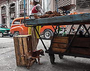 A dog relieves himself on a vendor's stand. Centro Habana, Cuba.