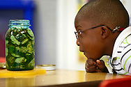Vainqueur Debe, 4, stares at a jar of cucumbers filled with brine as a class makes pickles at the Linn County Child Development Center  in Cedar Rapids on Friday, Aug. 3, 2018.