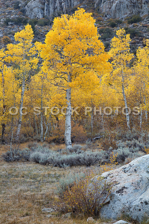 Inyo National Forest in the Fall
