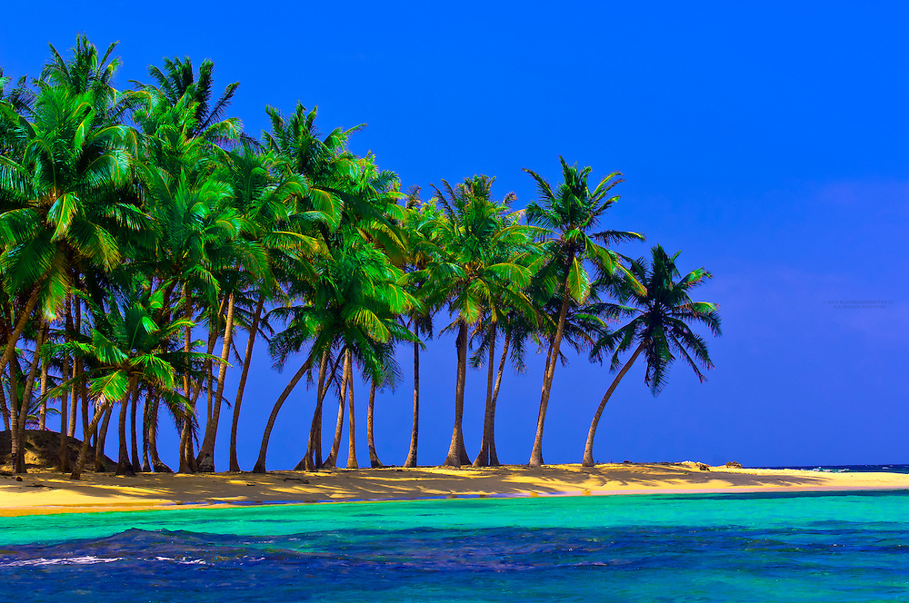 Palm trees on Pelican Island (a.k.a. Icotupo Island), San Blas Islands (Kuna Yala), Caribbean Sea, Panama