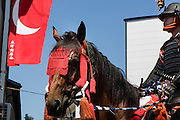 Soma, Fukushima prefecture, July 25 2015 - Parade of samurai riding horses on the streets of Minami-Soma duroing Nomaoi.<br /> The Soma nomaoi is said to be a 1000-year-old traditional festival. It was held in 2011, a few months after the nuclear disaster, but only a few local horses were available.