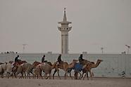 QT 113 camel race in Qatar