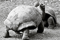 Animals, tortoises.<br />