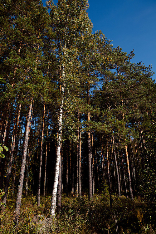 Nova Forest