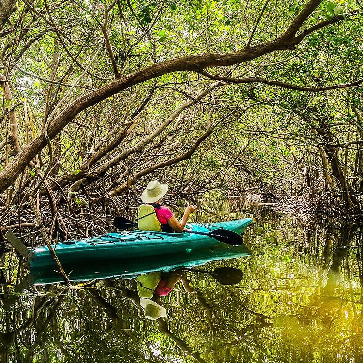 Kayaking in the mangrove tunnels at Robinson Preserve, Bradenton, Florida.