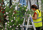 © under license to London News Pictures. LONDON, UK  19/05/2011.Exhibitors ready their displays today (19 May 2011) ahead of The Chelsea Flower show in London. Every year the grounds of the Royal Hospital, London, are transformed into show gardens, inspirational small gardens and vibrant horticultural displays that make up the world's most famous flower show which runs from 24 May 2011 to 28 May 2011. Photo credit should read Stephen Simpson/LNP.