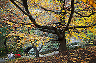 Couple Relaxing in Japanese Garden at The Huntington During Fall Season, San Marino, California