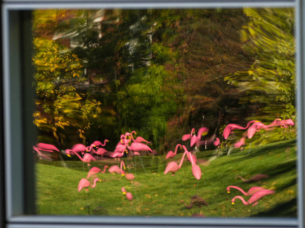 Wisconsin Foundation Alumni Association Fill the Hill #UWFlamingoes #fillthehill Oct. 16, 2015, in Madison, Wis. (Photo © Andy Manis)