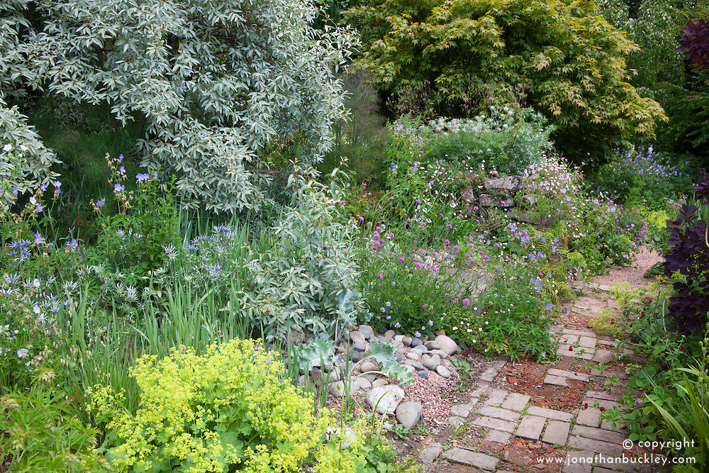 The seaside garden at Glebe Cottage with Elaeagnus 'Quicksilver' , eryngiums, Crambe maritima and pulsatilla seedheads