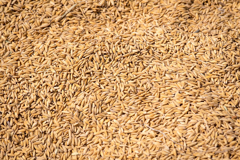Rice Grains in market,  Ganta, Liberia