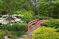 Red painted bridge in Japanese Gardens with lush planting