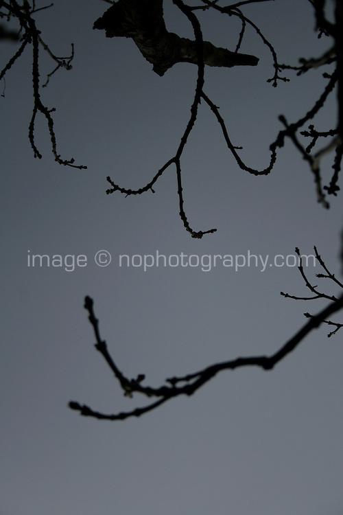 Silhouette of bare tree branches against grey winter sky before the rain in Dublin Ireland