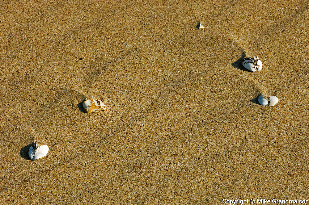 Freshwater mussels on sandy beach, Carter Bay, Manitoulin Island<br /> Manitoulin Island<br /> Ontario<br /> Canada