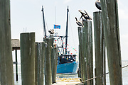 A decorated shrimp boat parades past the docks down Shem Creek during the annual Blessing of the Fleet signifying the start of the commercial shrimping season April 30, 2017 in Mount Pleasant, South Carolina. Coastal shrimping is part of the low country heritage but has been declining rapidly with rising costs and increased foreign competition.
