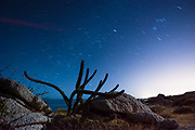 A cactus in the night just outside San Jose Del Cabo, Mexico.  Discovered during a beach exploration and night camping within earshot of the ocean.
