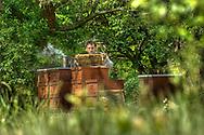 DEU, Deutschland: Biene, Honigbiene (Apis mellifera), Imkermeister Dirk Ahrens-Lagast kontrolliert seine Bienenstöcke, Bienenvölker müssen aus praktischen Gründen im Vergleich zu natürlichen Wildpopulationen sehr eng gehalten werden. Dies begünstigt allerdings auch die Ausbreitung von Krankheiten in den Völkern, die Bienenkästen bestehen aus Holz und sind genormt, Bienenstation an der Bayerischen Julius-Maximilians-Universität Würzburg | DEU, Germany: Bee, Honey-bee (Apis mellifera), Beekeeper Dirk Ahrens-Lagast controlling his beehives, bee populations are keept quiete close together out of practical reasons in comparison to wild bee populations, but this also means that deseases may spread over easily from population to population, the beehives are out of wood and in a norm size, Beestation at the Bavarian Julius-Maximilians-University Würzburg