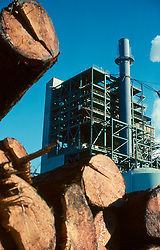 Stock photo of an industrial logging facility