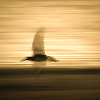 Abstract : Moving Images of Birds