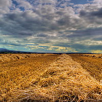Freshly cut harvest with straw on ground under summer cloudy sky