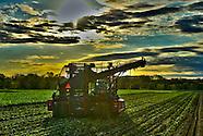 Minnesota Beet Harvest