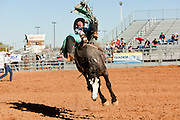26 NOVEMBER 2011 - CHANDLER, AZ:    TYLER STAKER competes in the bareback bronc competition at the Grand Canyon Pro Rodeo Association (GCPRA) Finals at Rawhide Western Town in west Chandler, AZ, about 20 miles from Phoenix Saturday. The GCPRA Finals is the last rodeo of the GCPRA season. The GCPRA is a professional rodeo association based in Arizona.    PHOTO BY JACK KURTZ