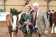 Midland Shire Foal Show 2016