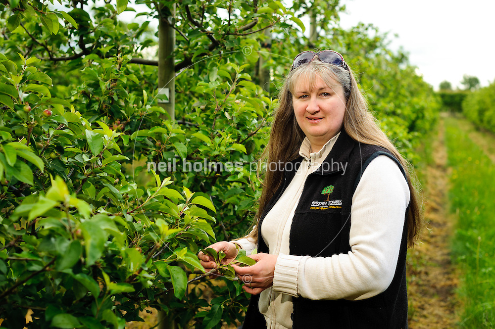 Wilberfoss, Yorkshire Orchards apple growers. Pictured Angela Allison