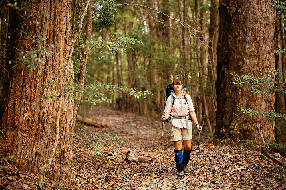Walking through satinay forests on the Fraser Island Great Walk between Petries Camp and Lake Garawongera.